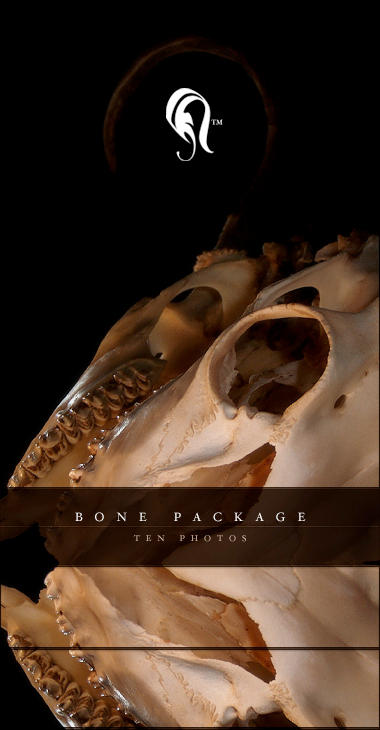 Package - Bone - 1.5 by resurgere