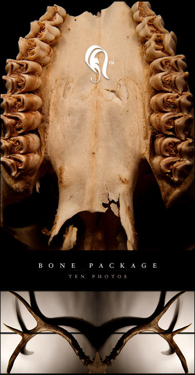 Package - Bone - 2 by resurgere