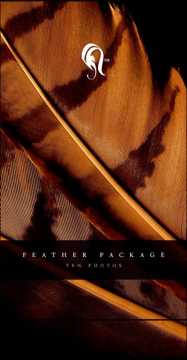 Package - Feather - 4 by resurgere