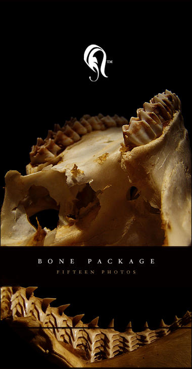 Package - Bone - 4 by resurgere