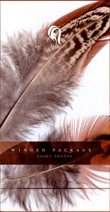Package - Winged - 1 by resurgere