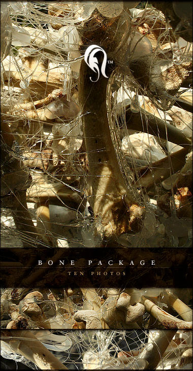 Package - Bone - 5 by resurgere