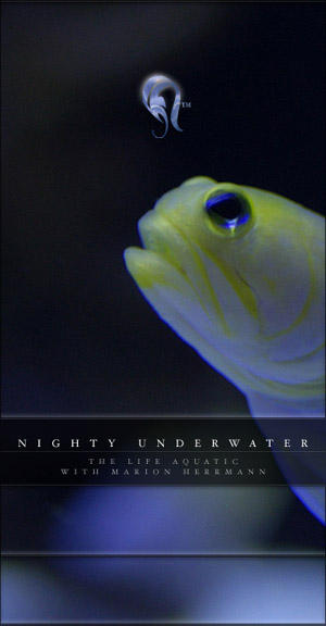 Package - Nighty Underwater by resurgere