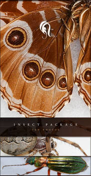Package - Insect - 2
