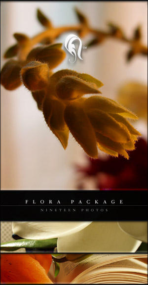Package - Flora - 7 by resurgere