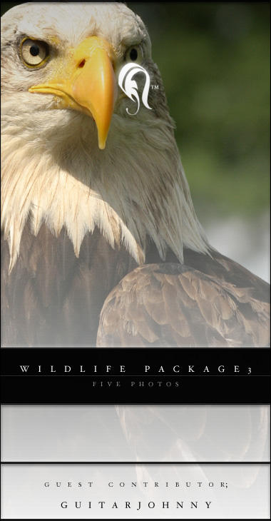 Package - Wild Life - 3 by resurgere