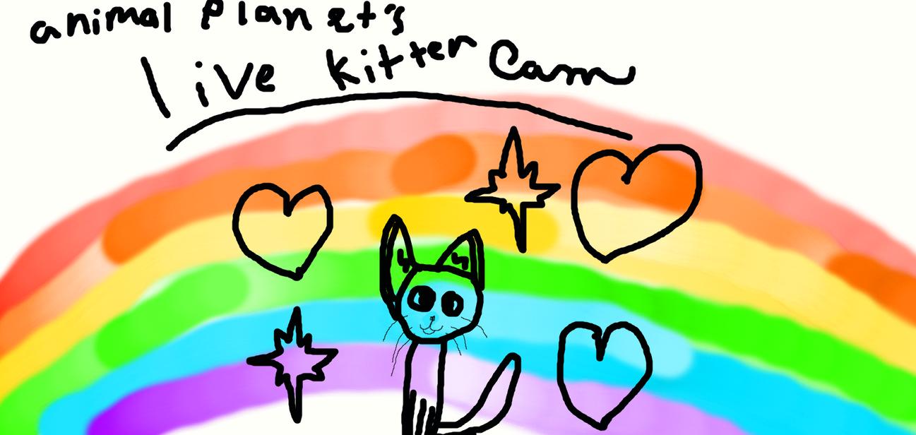 Animal Planet s Live Kitten Cam by lunathecat5454 on DeviantArt