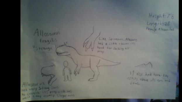 Allosaurus fragilis species profile