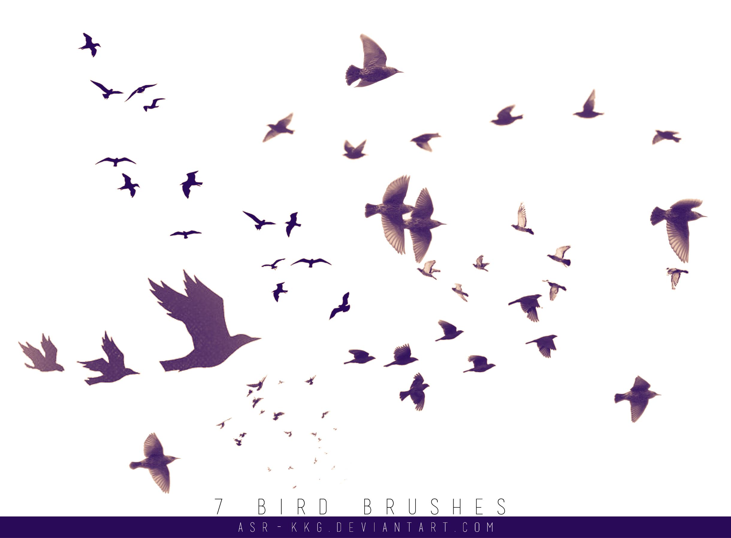 | 7 - B I R D S   B R U S H E S | by Dear-Raven