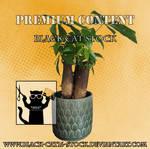 Pot plant precut clearcut png stock