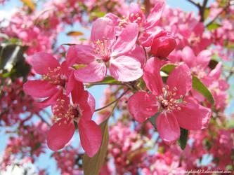 Pinkest Pink by morrighan03