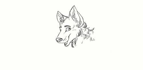 Random wolf doodle