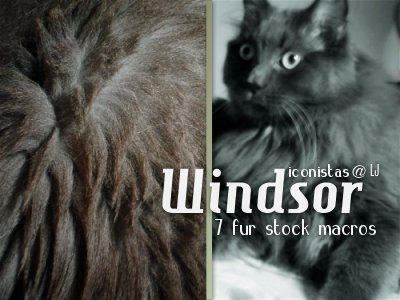 Windsor : Stock