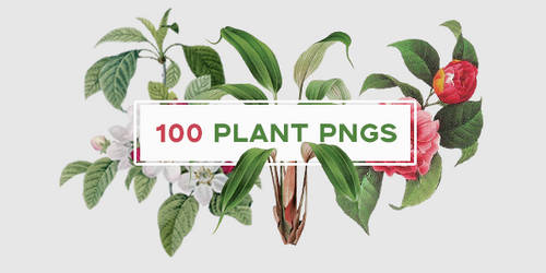 100 Plant/Flower Pngs