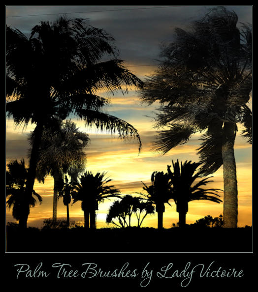 Palm Tree Brushes by LadyVictoire-Brushes