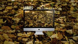 Leaves by krees91