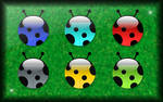 Coccinelle Pack