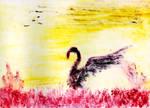 Swan Sunset by Erijel