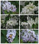 Fune-stock_flowerpack1