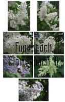 Fune-stock_flowerpack2 by Fune-Stock