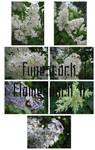 Fune-stock_flowerpack2