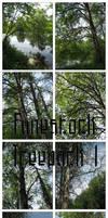 Fune-stock_treepack1