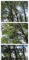 Fune-stock_treepack2