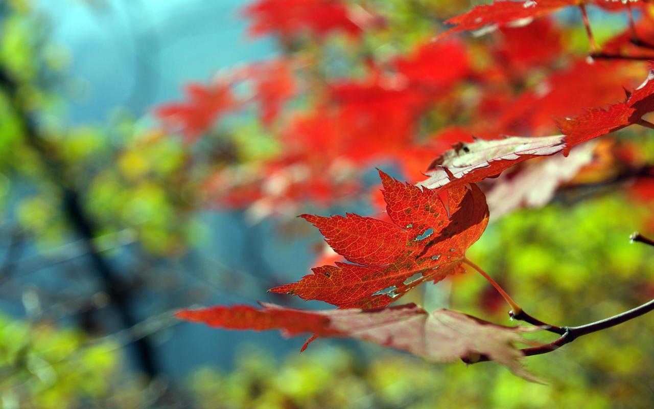 Beautiful Autumn by MeXuT