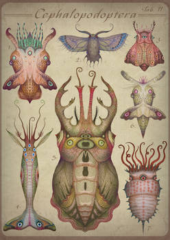 Cephalopodoptera / tab II
