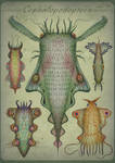 Cephalopodoptera / tab III