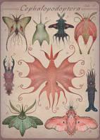 Cephalopodoptera / tab V by V-L-A-D-I-M-I-R