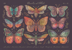 Butterflies and Moths by V-L-A-D-I-M-I-R