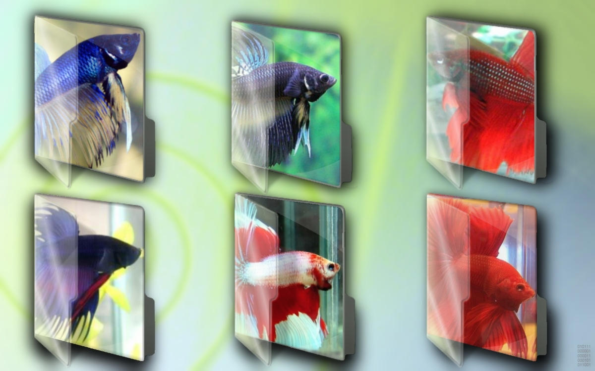Betta Fish Folder Set by centpushups