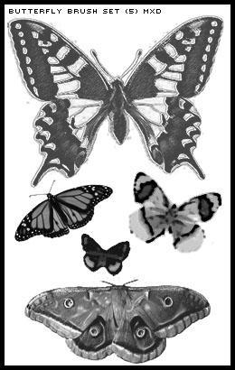 Butterfly Brush Set by MXDStock