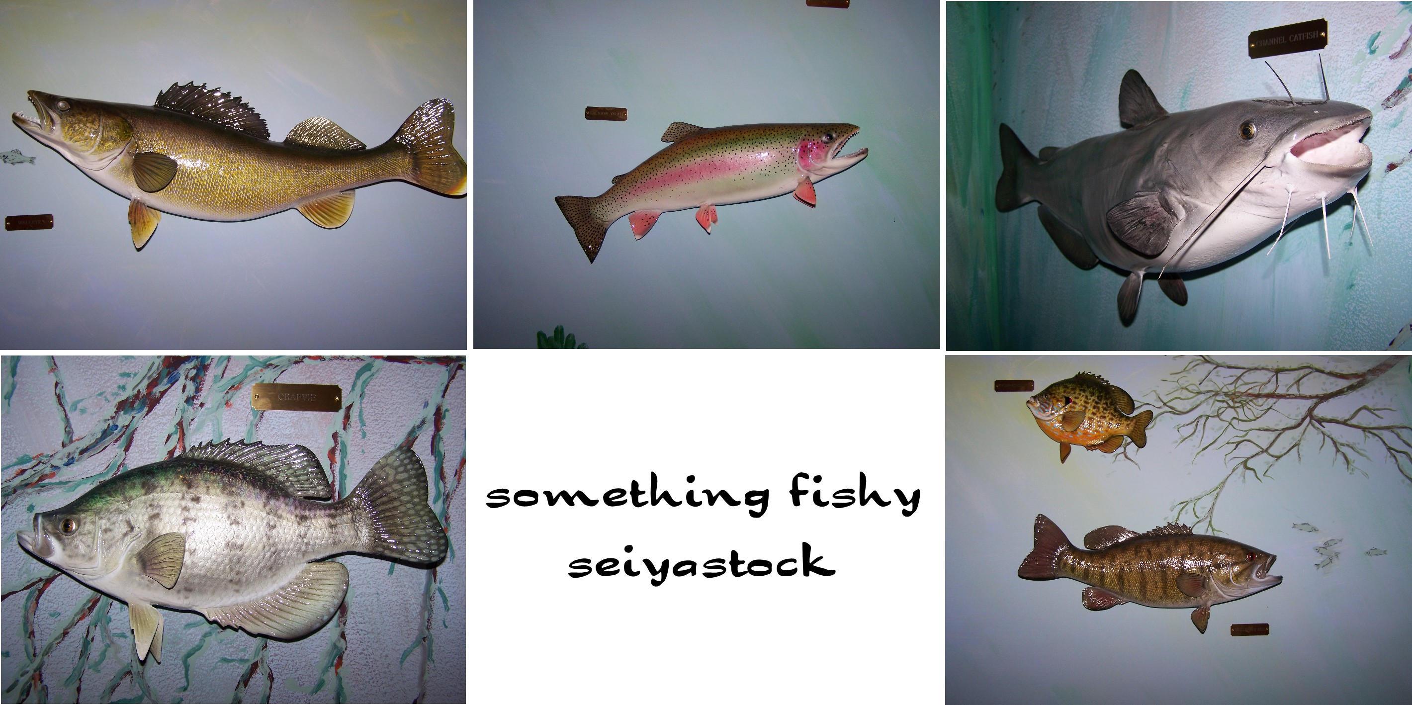 Something Fishy by seiyastock