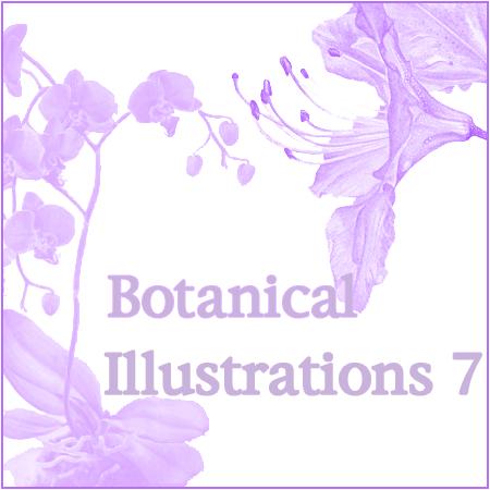 Botanical Illustrations 7
