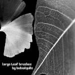 Large leaf brushes