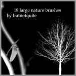 18 Nature brushes