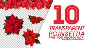10 Transparent Poinsettia