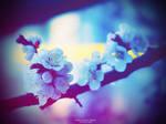 Spring Rhapsody Reborn