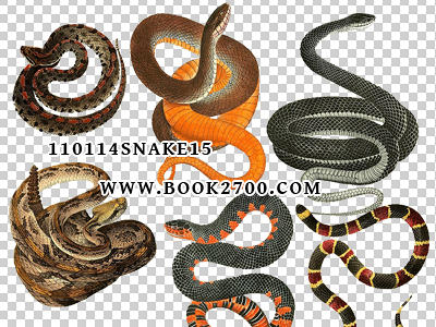 110114_snake15_by_eleven by eleven1627