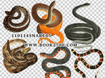 110114_snake15_by_eleven