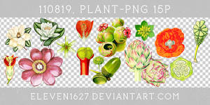 110819_Plant15_by_eleven