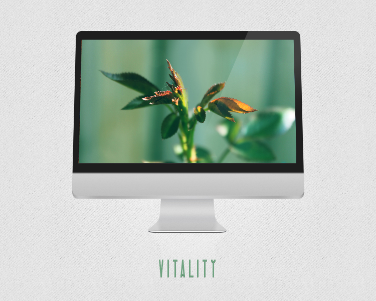 Vitality by PointVision