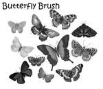 Butterfly Brush