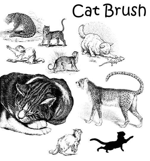 Cat Brush by PhoenixWildfire