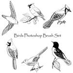 Birds Photoshop Brush Set