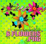 Flowers Colours png