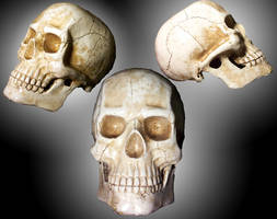 skull 1 by kyndelfire-stock by Cutoutstock