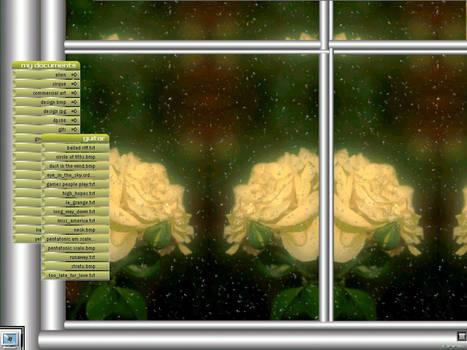 yellow rose-WS